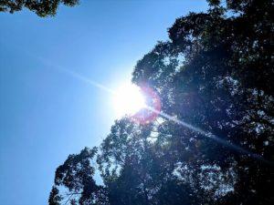 真夏の日差しの画像